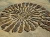 naturschauspiele_fossil